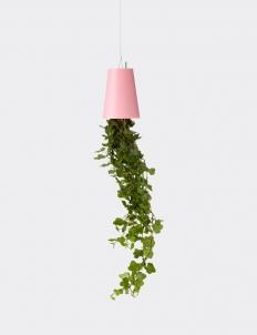 Small Pink Skyplanter