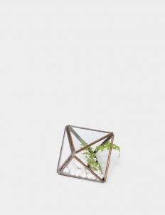 Diamond Bronze