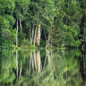 4D3N Tanjung Puting Trip