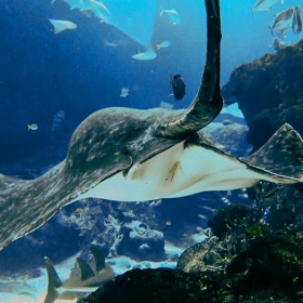1-Day Pass S.E.A. Aquarium