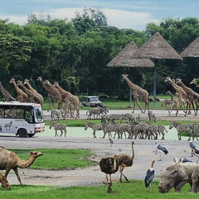 Bangkok Safari World Ticket with Transfer