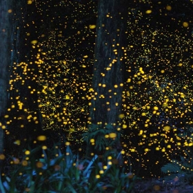Fireflies Sightseeing and Bukit Melawati Tour