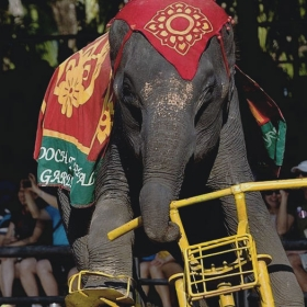 Floating Market & Rose Garden with Elephant Show