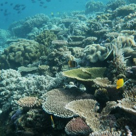 Diving Experience at Wakatobi