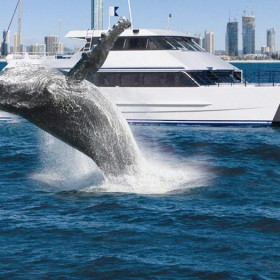 Gold Coast Flexi Attractions Pass